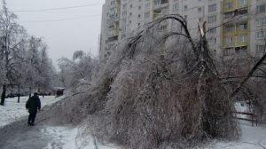 Восьмилетняя девочка попала в Подмосковье в реанимацию после того, как на нее упала отломившаяся из-за снегопада ветвь дерева