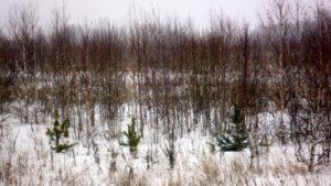 Собственника в Истре оштрафовали за неухоженный участок земли