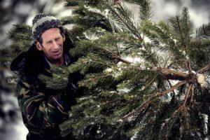 Более 40 фактов незаконной рубки хвойных деревьев выявлено в Подмосковье в ходе операции «Елочка»