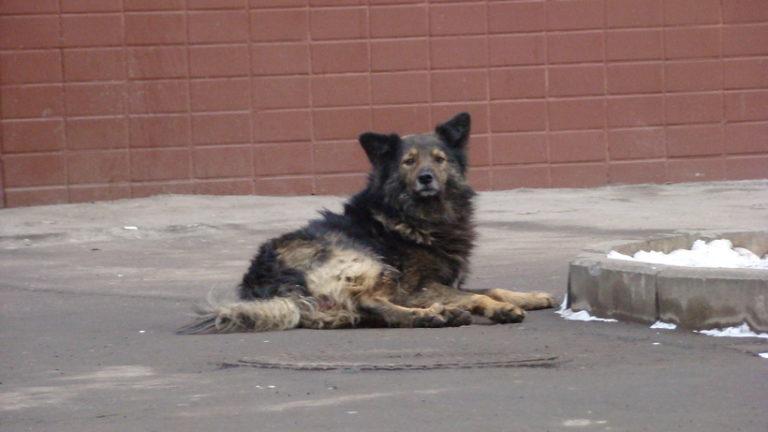 Племянница Юрия Лозы ждет ребенка от мужчины, растерзанного собаками в Истре