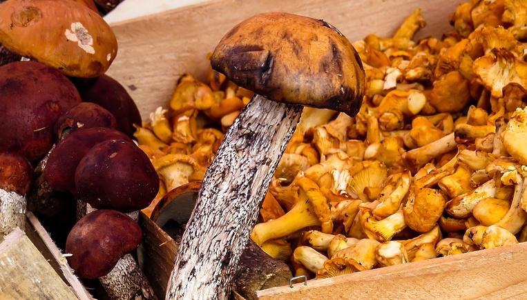 Подмосковье стало лидером в РФ по производству грибов
